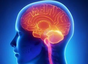 cerebro-gimnasia-cerebral